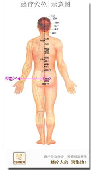 腰骶部是哪个部位图片
