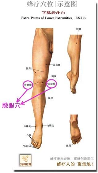 髌骨解剖结构图