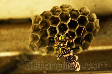 手工蜜蜂步骤图片
