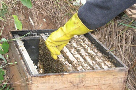 标准蜂箱尺寸 蜂箱中间的蜂格标准尺寸是多少?