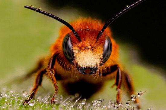 蜜蜂浑身是宝02蜂医学问不小