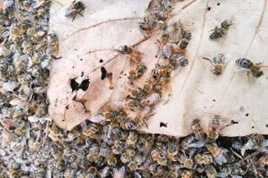蜜蜂箱内部结构图片