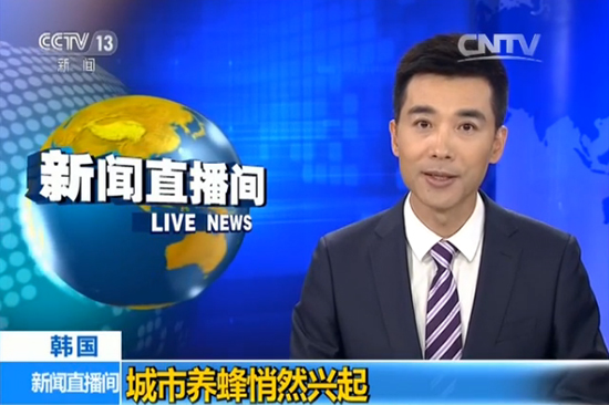 【视频】韩国兴起都市养蜂热潮