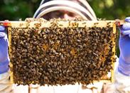 宣城市祥云养蜂专业合作社