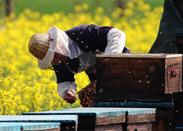 宜黄远森蜂业合作社